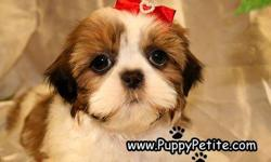 Visit us now to see our adorable, toy and imperial size Shih Tzu puppies. They come in all colors including red and whites, brindle and whites, black and whites etc. and they make great family pets. Theyare8-12weeksold and the