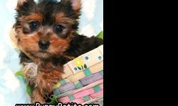 Our toy and teacup Yorkie puppies make the best presents. Ours have sweet baby doll faces and shiny hair coats. They are 8 to 12 weeks old and the price starts at $550.We specialize in toy breeds and also very tiny teacup and pocket size